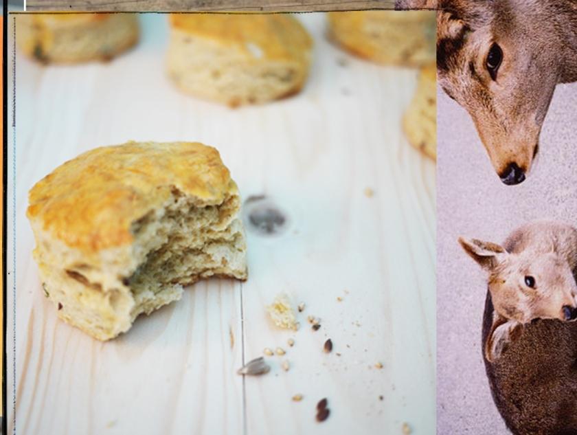collage photo autour de la nourriture
