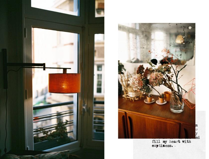 Lumière douce et fleurs séchées